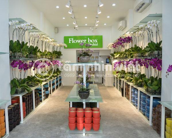 Làm chữ nổi mica quảng cáo – thương hiệu hoa Flower Box